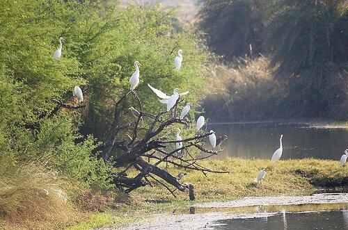 Van-Vihar-National-Park